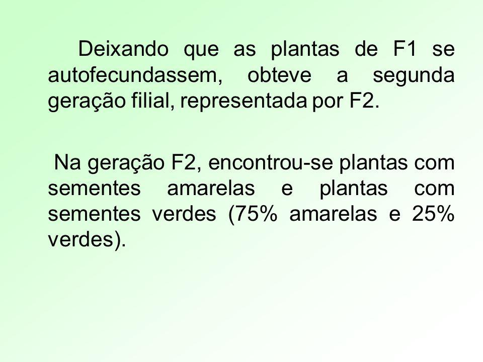 Deixando que as plantas de F1 se autofecundassem, obteve a segunda geração filial, representada por F2. Na geração F2, encontrou-se plantas com sement