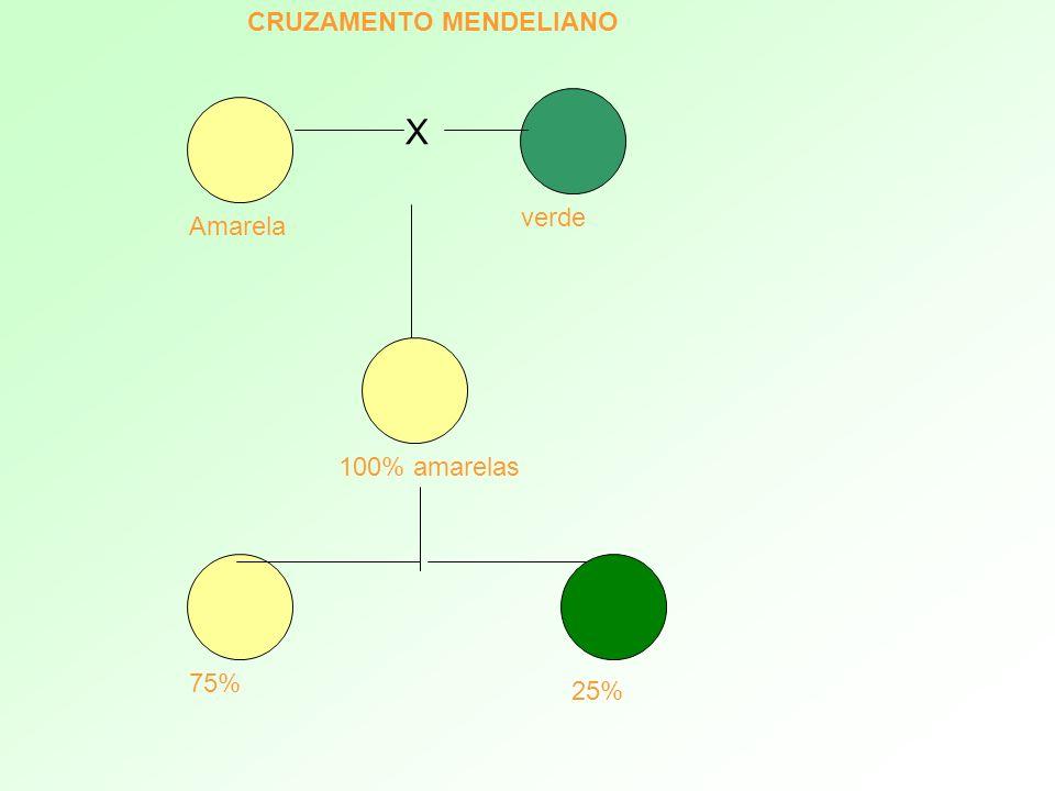 X Amarela verde 100% amarelas 75% 25% CRUZAMENTO MENDELIANO