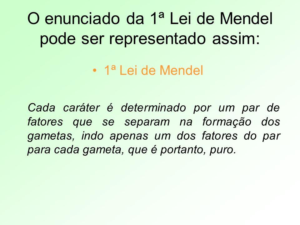 O enunciado da 1ª Lei de Mendel pode ser representado assim: 1ª Lei de Mendel Cada caráter é determinado por um par de fatores que se separam na forma