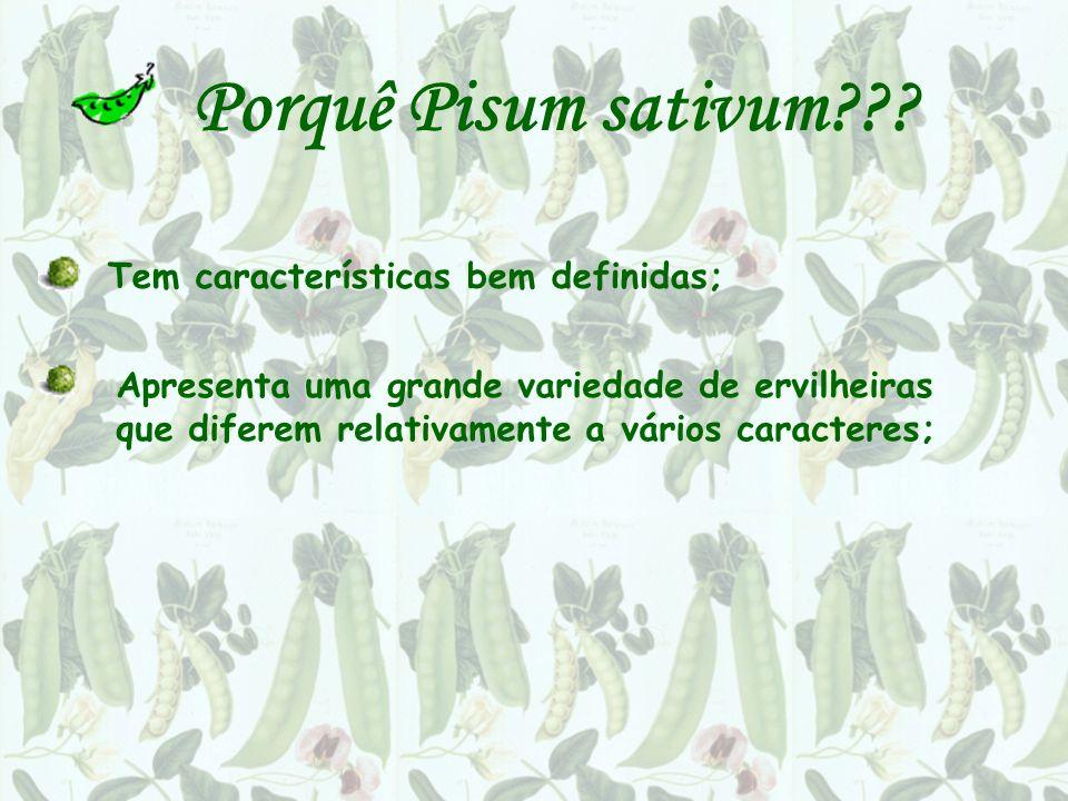 Porquê Pisum sativum??? Tem características bem definidas; Apresenta uma grande variedade de ervilheiras que diferem relativamente a vários caracteres