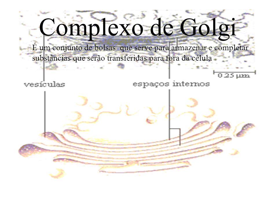 SISTEMA GOLGIENSE