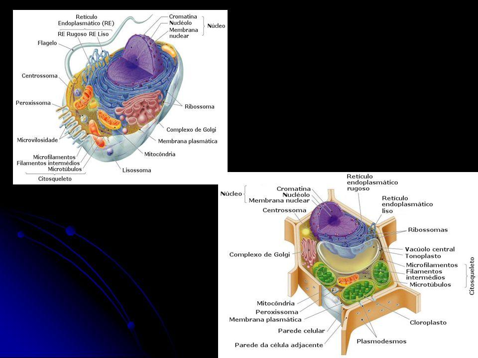Comparação: Célula procarionte/ célula eucarionte Célula procarionteCélula eucarionte