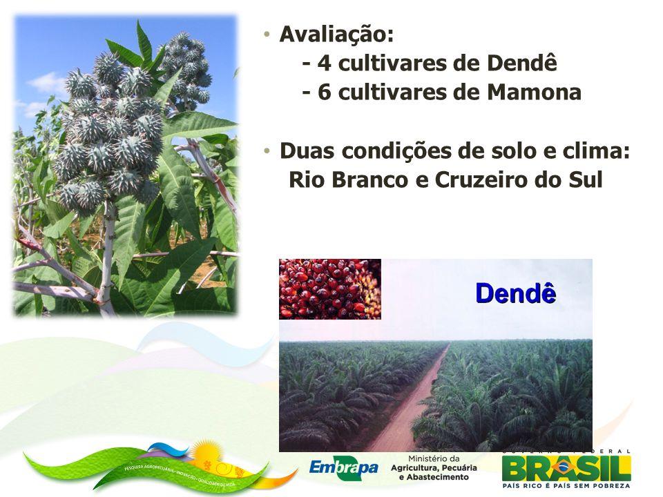 Avaliação: - 4 cultivares de Dendê - 6 cultivares de Mamona Duas condições de solo e clima: Rio Branco e Cruzeiro do Sul