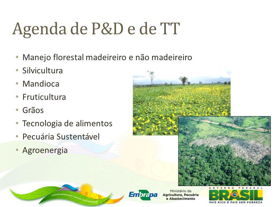 Agenda de P&D e de TT Manejo florestal madeireiro e não madeireiro Silvicultura Mandioca Fruticultura Grãos Tecnologia de alimentos Pecuária Sustentáv