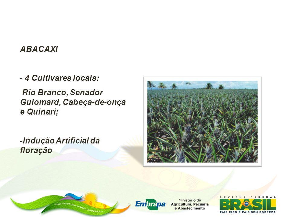 ABACAXI - 4 Cultivares locais: Rio Branco, Senador Guiomard, Cabeça-de-onça e Quinari; -Indução Artificial da floração