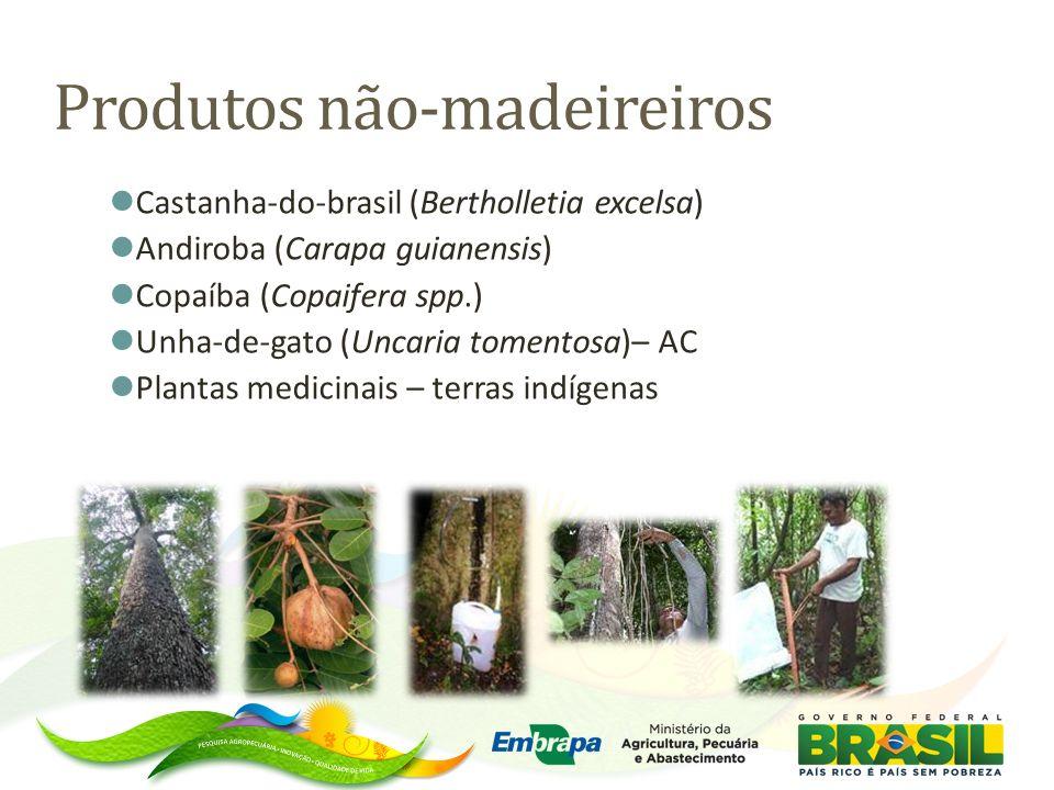 SERINGUEIRA - Manejo de seringais nativos - Seringueira tricomposta – Seleção de clones de copa e painel - Seleção de novos clones tolerantes ao mal-das-folhas