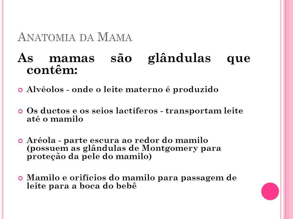 A NATOMIA DA M AMA As mamas são glândulas que contêm: Alvéolos - onde o leite materno é produzido Os ductos e os seios lactíferos - transportam leite