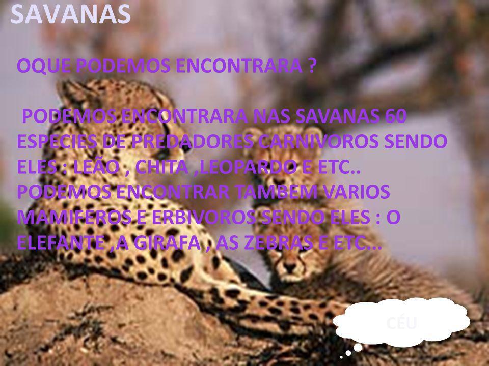 26/04/11 SAVANAS OQUE PODEMOS ENCONTRARA ? PODEMOS ENCONTRARA NAS SAVANAS 60 ESPECIES DE PREDADORES CARNIVOROS SENDO ELES : LEÃO, CHITA,LEOPARDO E ETC