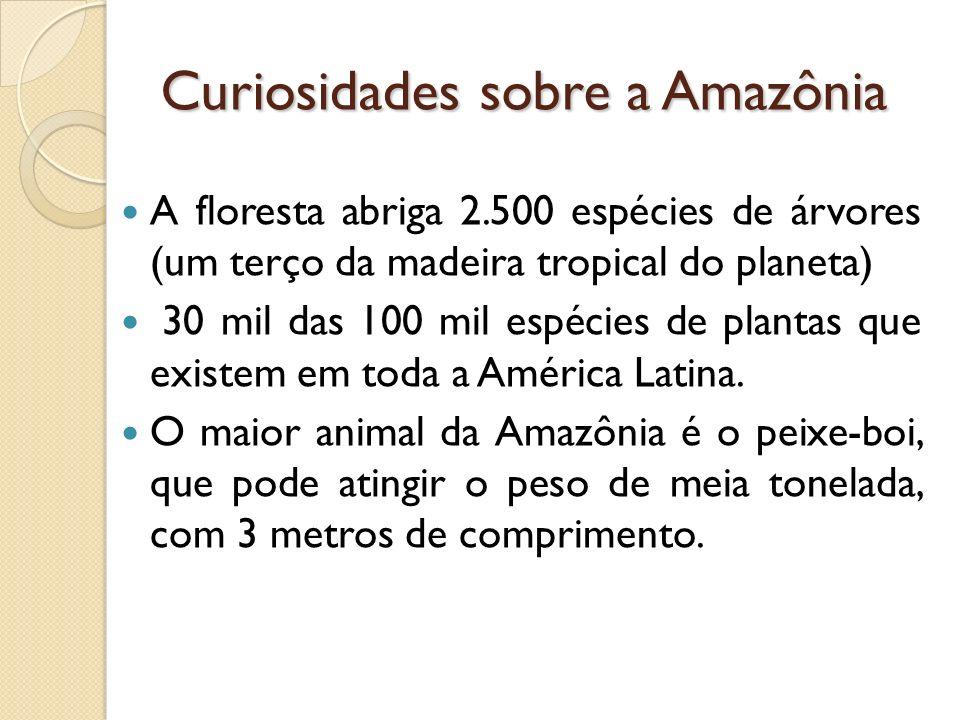 Curiosidades sobre a Amazônia A floresta abriga 2.500 espécies de árvores (um terço da madeira tropical do planeta) 30 mil das 100 mil espécies de plantas que existem em toda a América Latina.