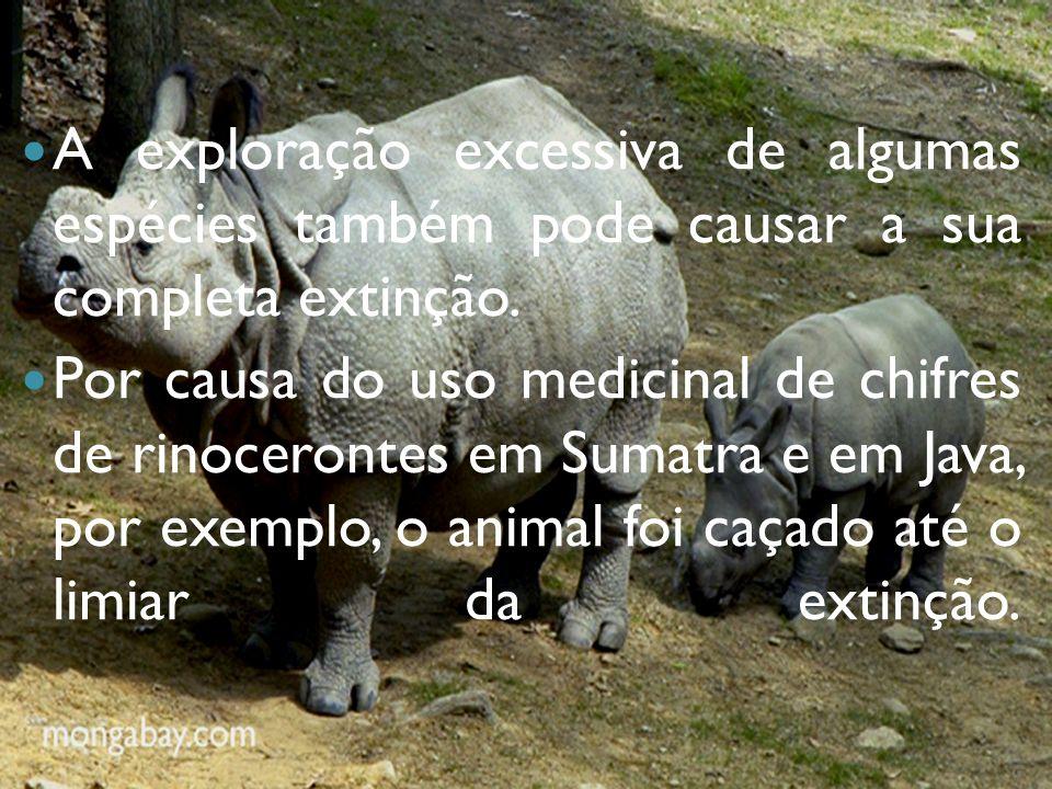A exploração excessiva de algumas espécies também pode causar a sua completa extinção.
