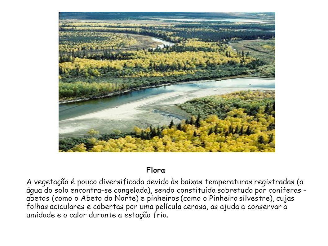 A vegetação é pouco diversificada devido às baixas temperaturas registradas (a água do solo encontra-se congelada), sendo constituída sobretudo por co