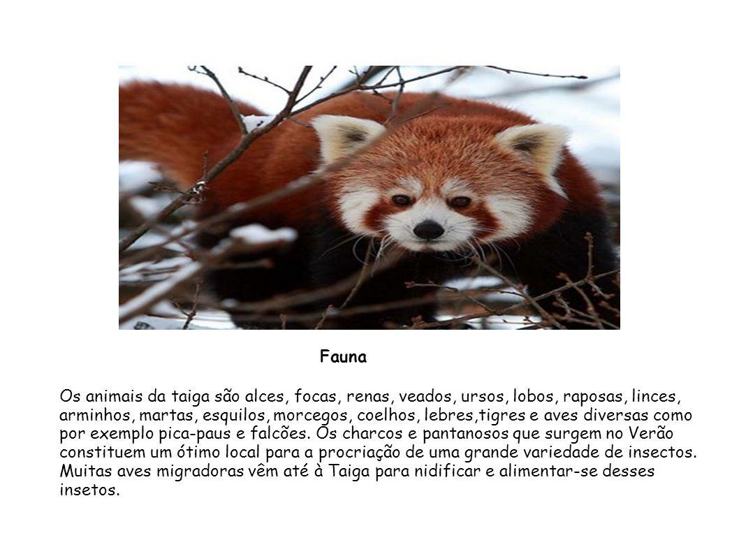 Os animais da taiga são alces, focas, renas, veados, ursos, lobos, raposas, linces, arminhos, martas, esquilos, morcegos, coelhos, lebres,tigres e ave