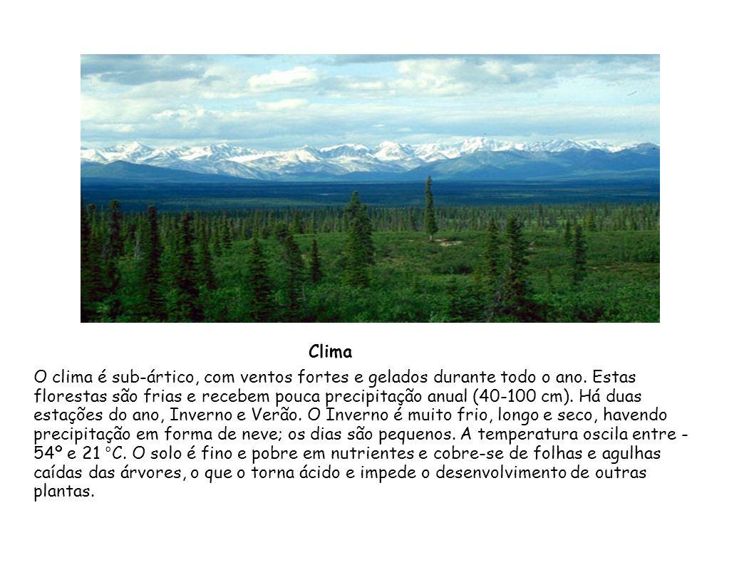 O clima é sub-ártico, com ventos fortes e gelados durante todo o ano. Estas florestas são frias e recebem pouca precipitação anual (40-100 cm). Há dua