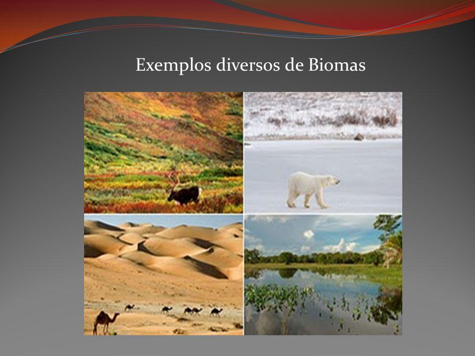 Exemplos diversos de Biomas