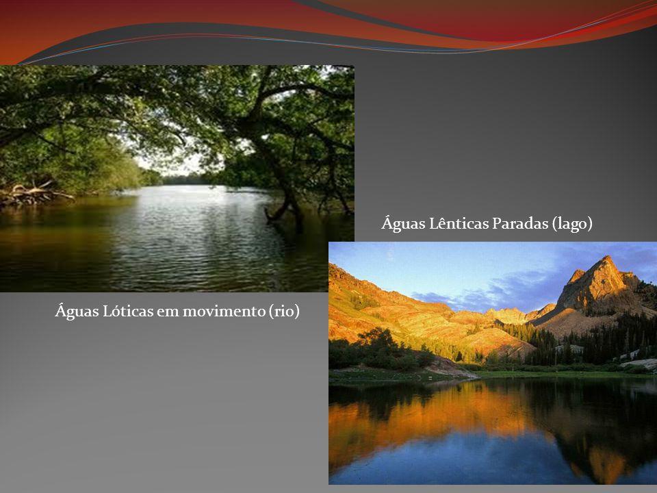 Águas Lóticas em movimento (rio) Águas Lênticas Paradas (lago)