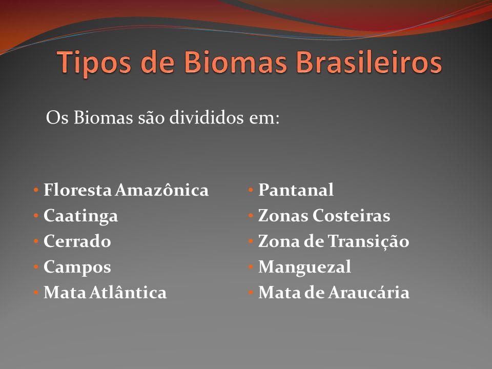 Floresta Amazônica Caatinga Cerrado Campos Mata Atlântica Pantanal Zonas Costeiras Zona de Transição Manguezal Mata de Araucária Os Biomas são dividid