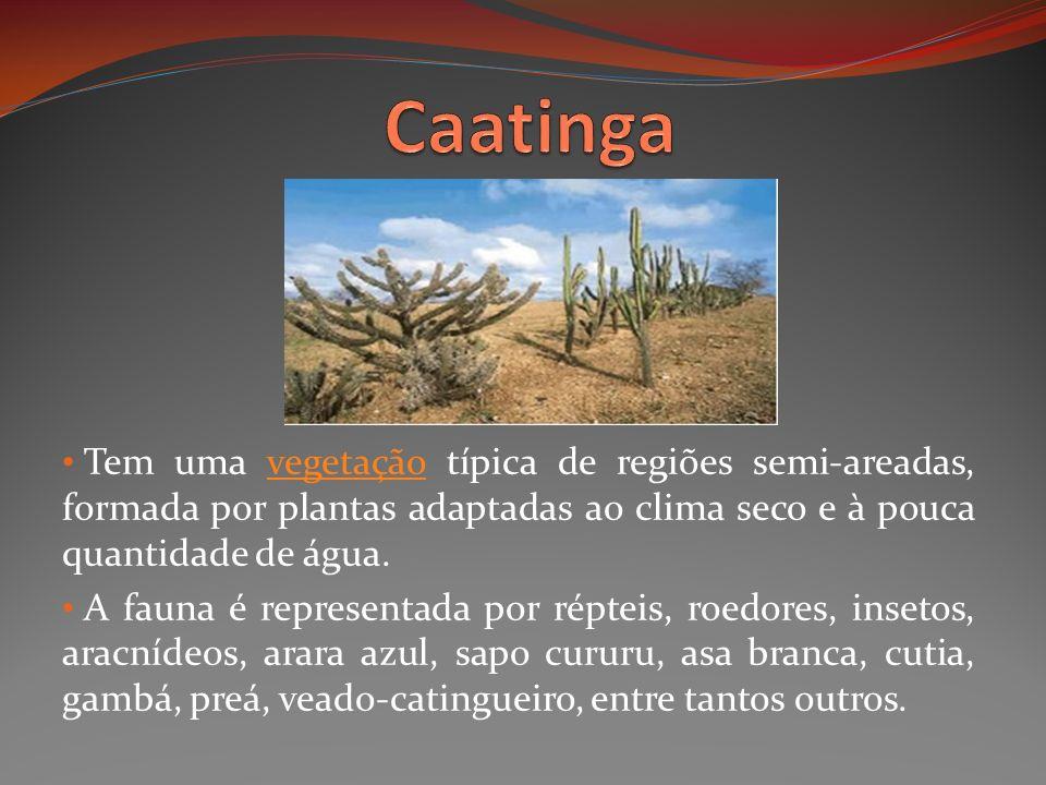 Tem uma vegetação típica de regiões semi-areadas, formada por plantas adaptadas ao clima seco e à pouca quantidade de água.vegetação A fauna é represe