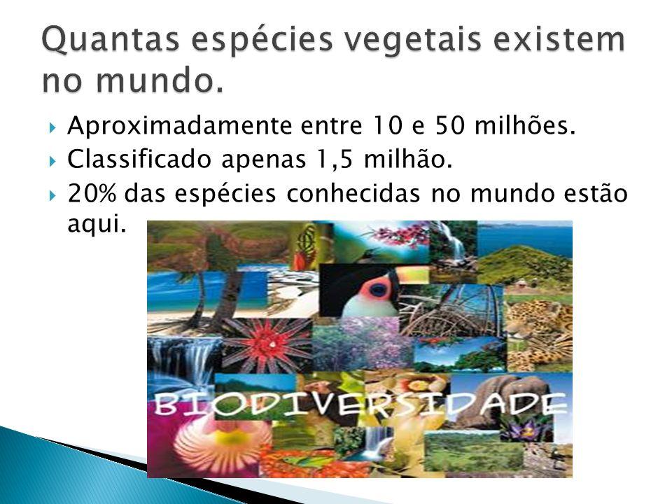 A maior parte está em território Brasileiro.