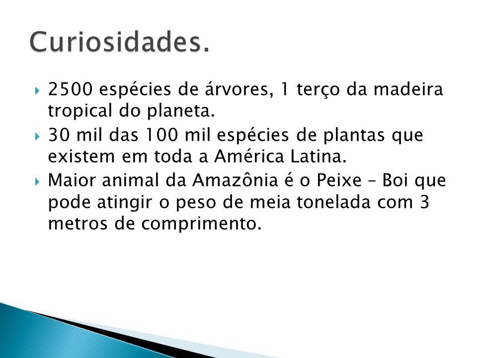 2500 espécies de árvores, 1 terço da madeira tropical do planeta. 30 mil das 100 mil espécies de plantas que existem em toda a América Latina. Maior a