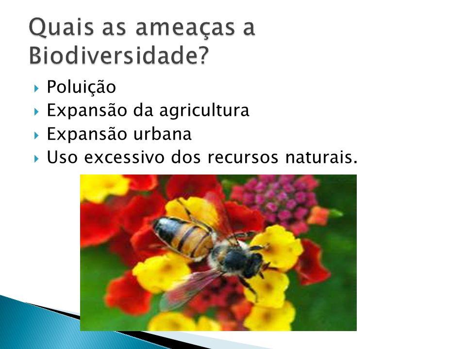 Poluição Expansão da agricultura Expansão urbana Uso excessivo dos recursos naturais.