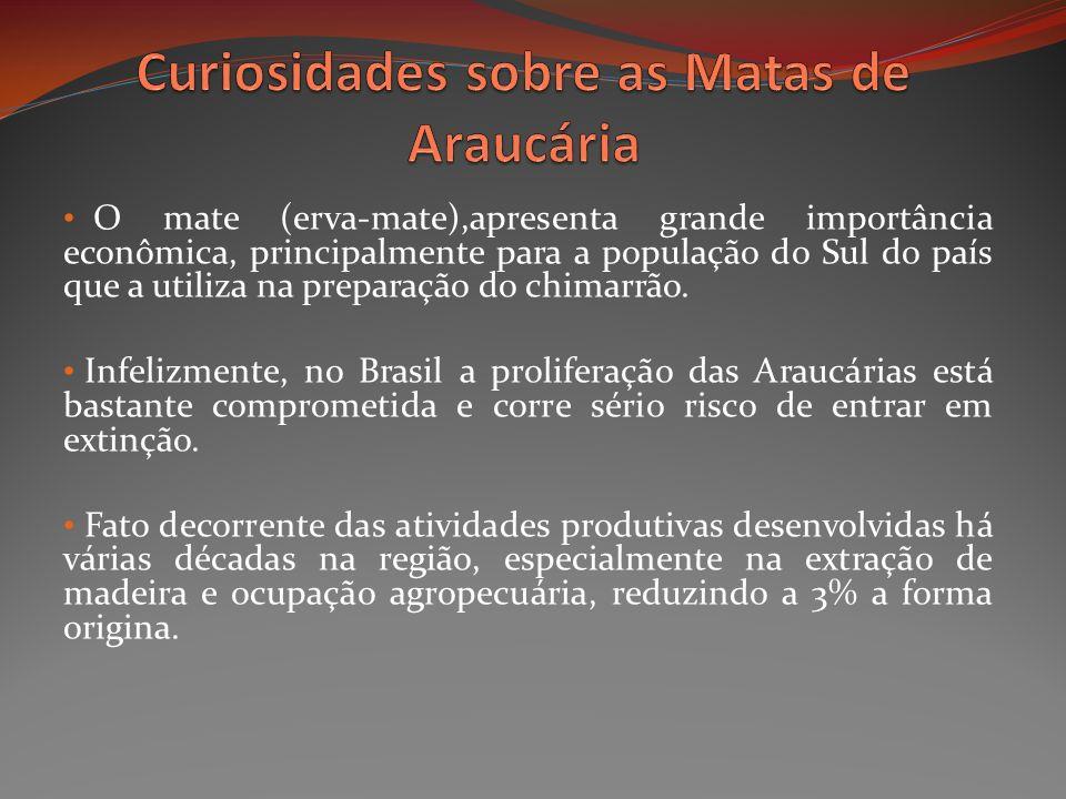 O mate (erva-mate),apresenta grande importância econômica, principalmente para a população do Sul do país que a utiliza na preparação do chimarrão. In