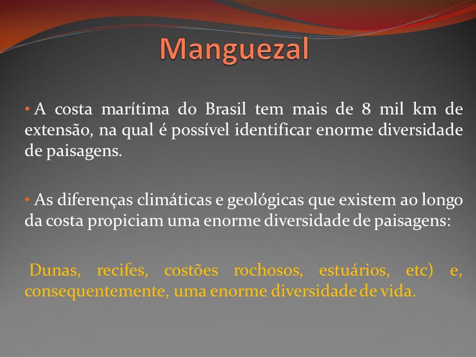 A costa marítima do Brasil tem mais de 8 mil km de extensão, na qual é possível identificar enorme diversidade de paisagens. As diferenças climáticas