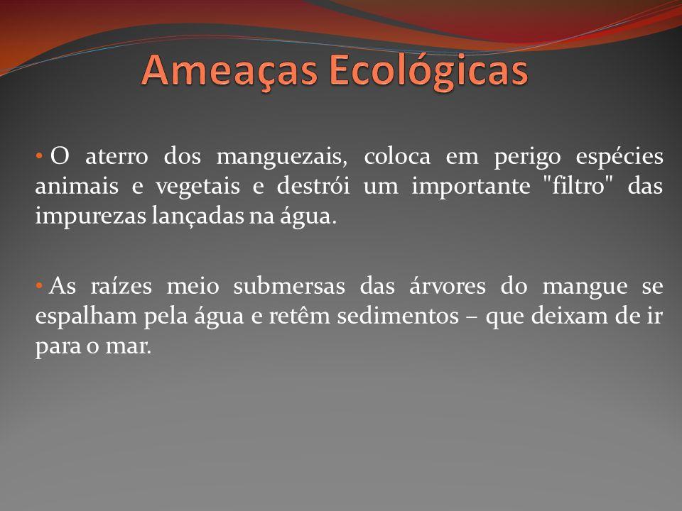 O aterro dos manguezais, coloca em perigo espécies animais e vegetais e destrói um importante