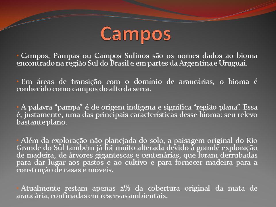 Campos, Pampas ou Campos Sulinos são os nomes dados ao bioma encontrado na região Sul do Brasil e em partes da Argentina e Uruguai. Em áreas de transi