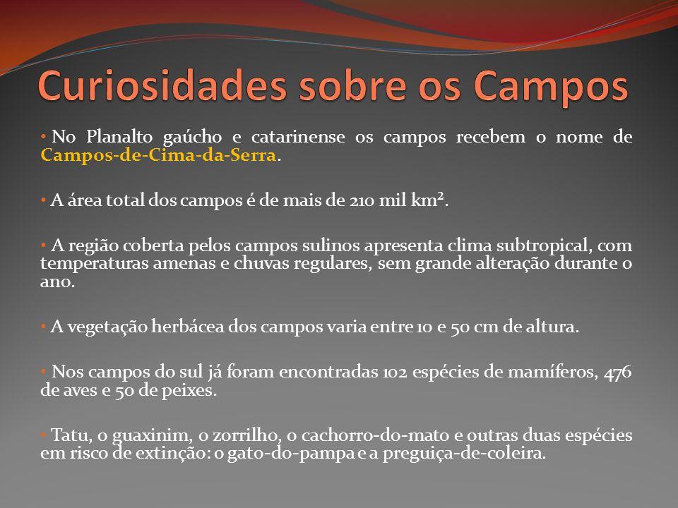 No Planalto gaúcho e catarinense os campos recebem o nome de Campos-de-Cima-da-Serra. A área total dos campos é de mais de 210 mil km². A região cober