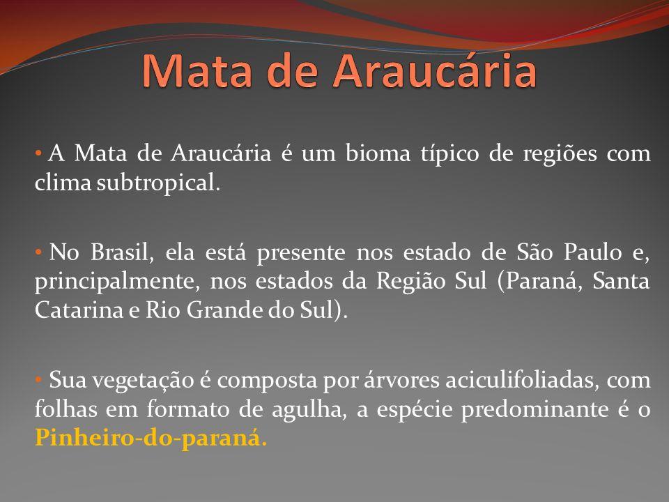 A Mata de Araucária é um bioma típico de regiões com clima subtropical. No Brasil, ela está presente nos estado de São Paulo e, principalmente, nos es