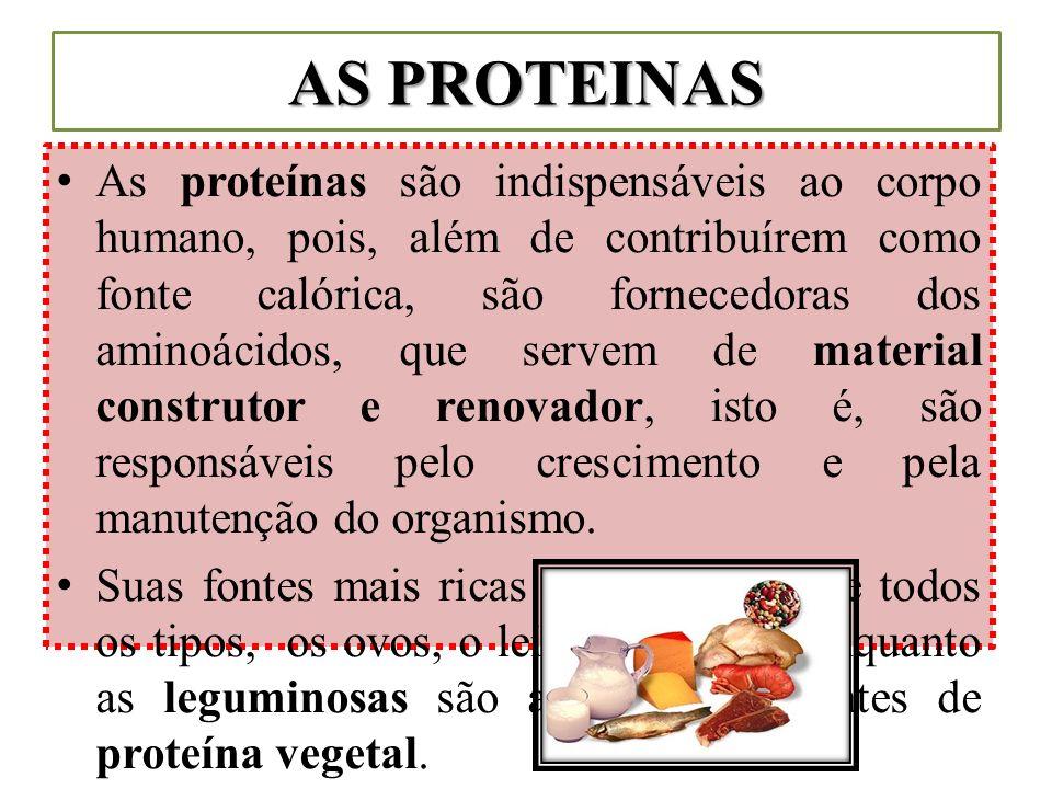 AS PROTEINAS As proteínas são indispensáveis ao corpo humano, pois, além de contribuírem como fonte calórica, são fornecedoras dos aminoácidos, que se