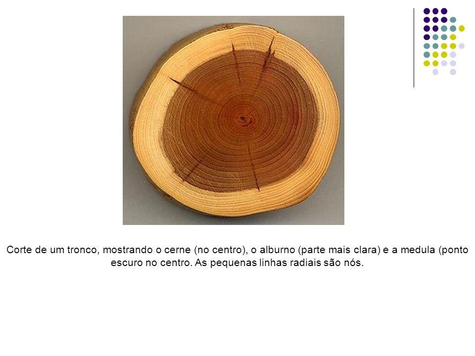 Corte de um tronco, mostrando o cerne (no centro), o alburno (parte mais clara) e a medula (ponto escuro no centro.