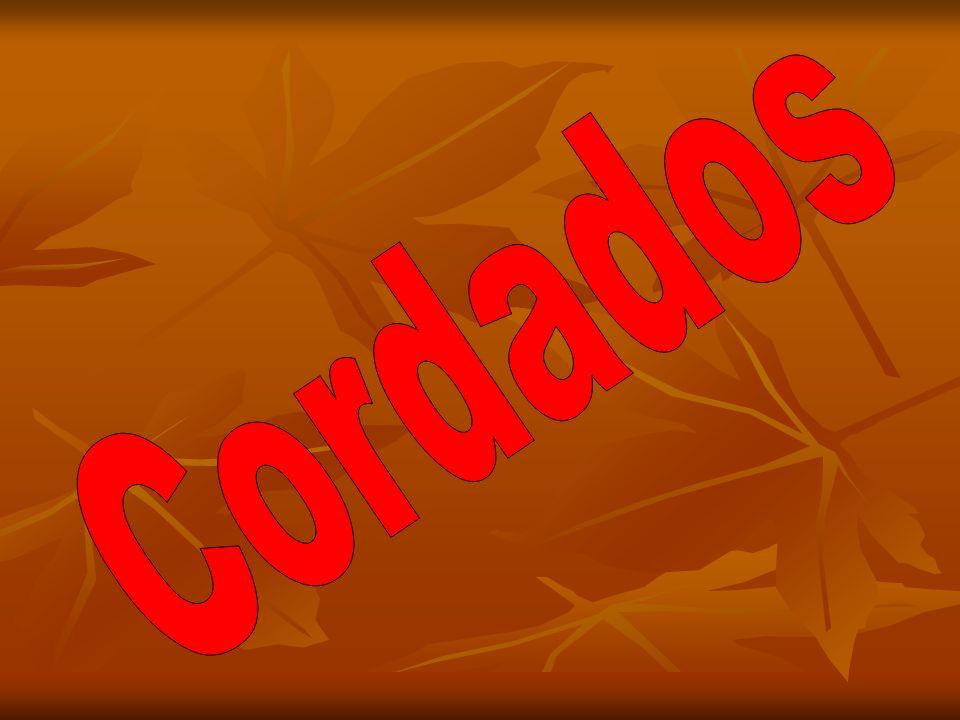 Assista o vídeo da música Cordados, e faça a atividade. clique no link abaixo