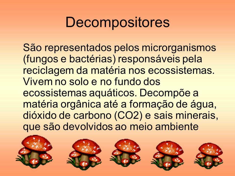 Decompositores São representados pelos microrganismos (fungos e bactérias) responsáveis pela reciclagem da matéria nos ecossistemas. Vivem no solo e n