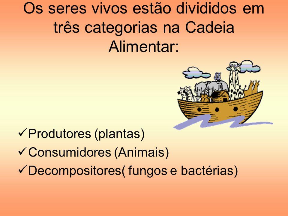Os seres vivos estão divididos em três categorias na Cadeia Alimentar: Produtores (plantas) Consumidores (Animais) Decompositores( fungos e bactérias)