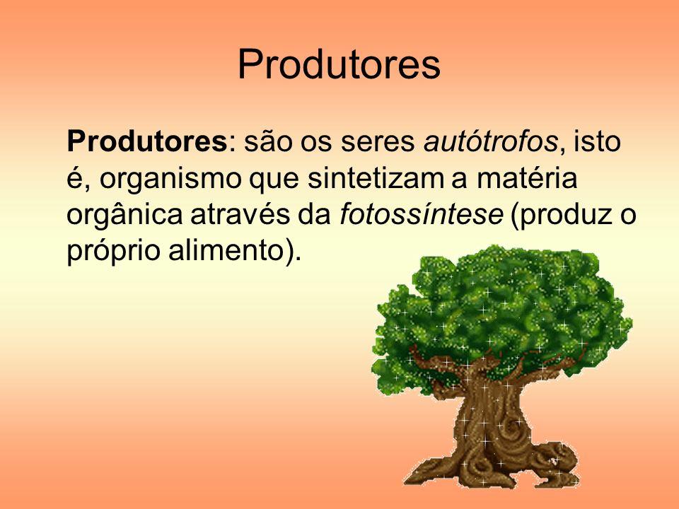 Produtores Produtores: são os seres autótrofos, isto é, organismo que sintetizam a matéria orgânica através da fotossíntese (produz o próprio alimento