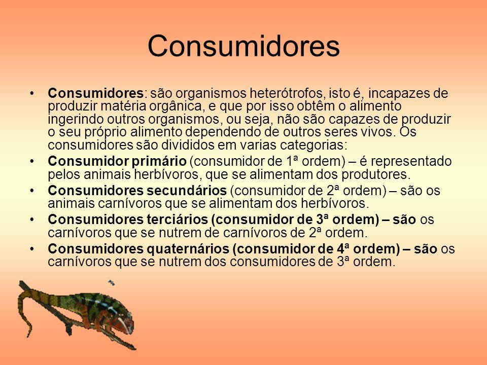 Consumidores Consumidores: são organismos heterótrofos, isto é, incapazes de produzir matéria orgânica, e que por isso obtêm o alimento ingerindo outr