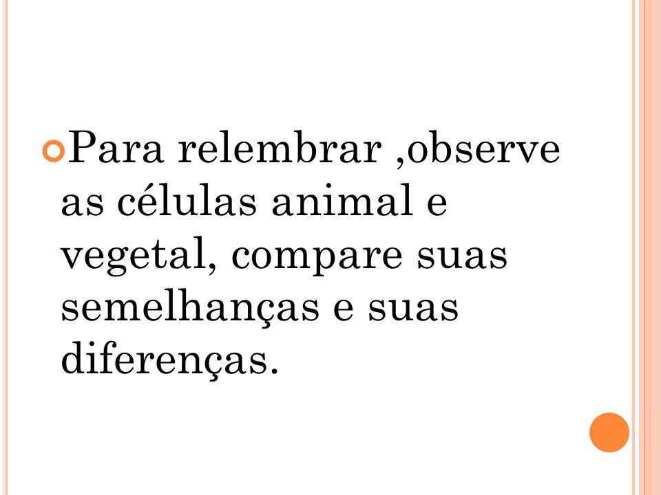 Para relembrar,observe as células animal e vegetal, compare suas semelhanças e suas diferenças.