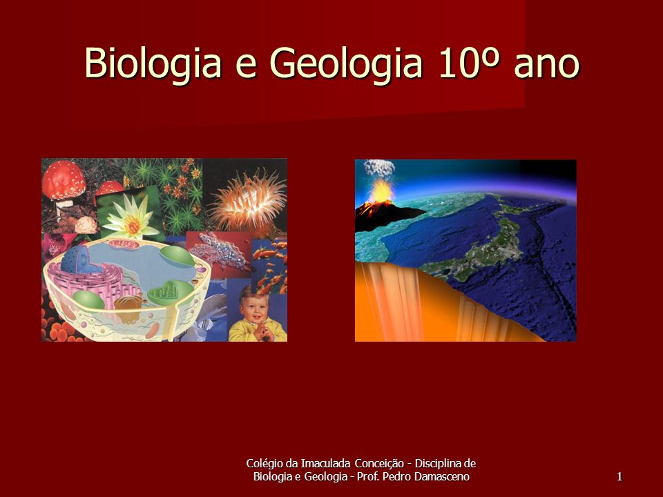 Colégio da Imaculada Conceição - Disciplina de Biologia e Geologia - Prof.