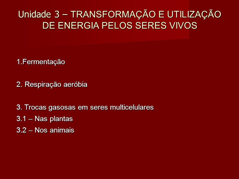 Unidade 3 – TRANSFORMAÇÃO E UTILIZAÇÃO DE ENERGIA PELOS SERES VIVOS 1.Fermentação 2.