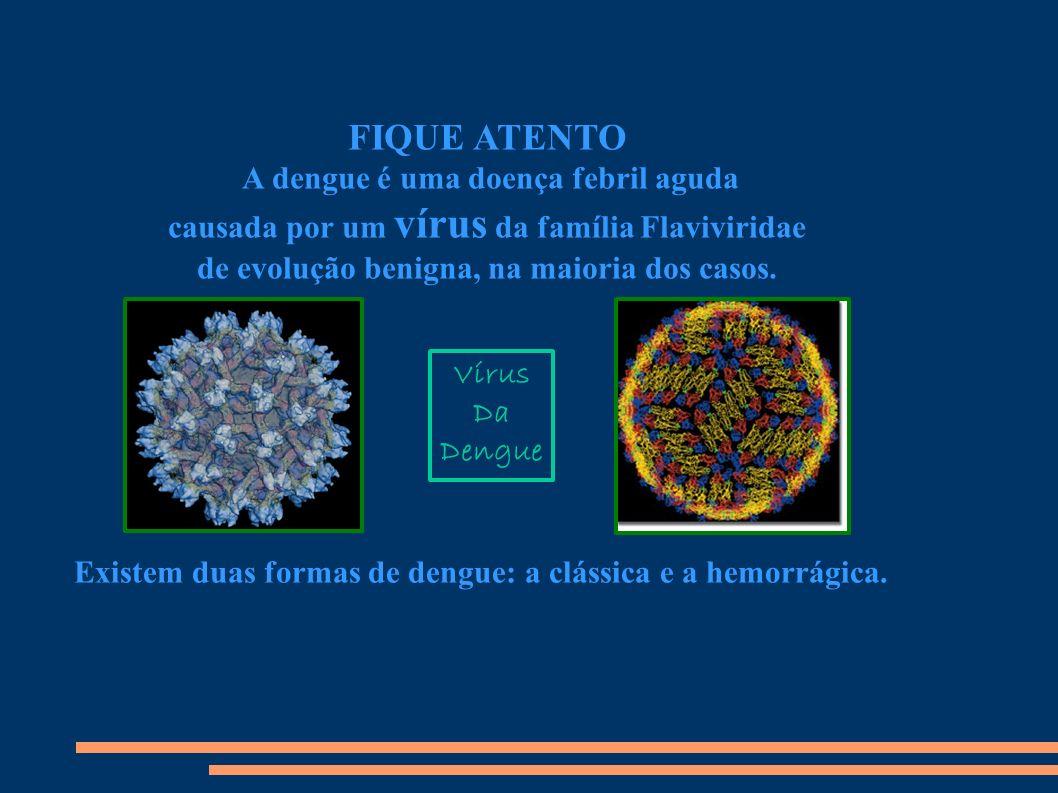 FIQUE ATENTO A dengue é uma doença febril aguda causada por um vírus da família Flaviviridae de evolução benigna, na maioria dos casos.