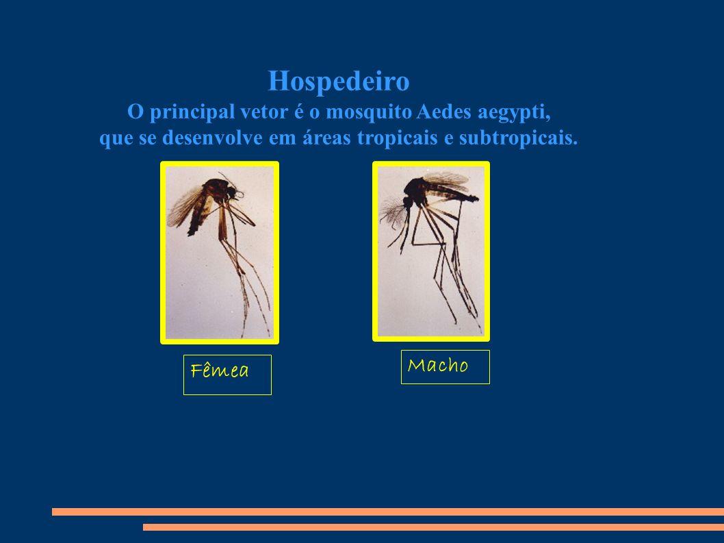 Hospedeiro O principal vetor é o mosquito Aedes aegypti, que se desenvolve em áreas tropicais e subtropicais.