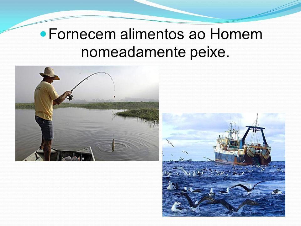 Fornecem alimentos ao Homem nomeadamente peixe.