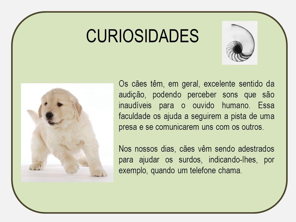 Os cães têm, em geral, excelente sentido da audição, podendo perceber sons que são inaudíveis para o ouvido humano. Essa faculdade os ajuda a seguirem