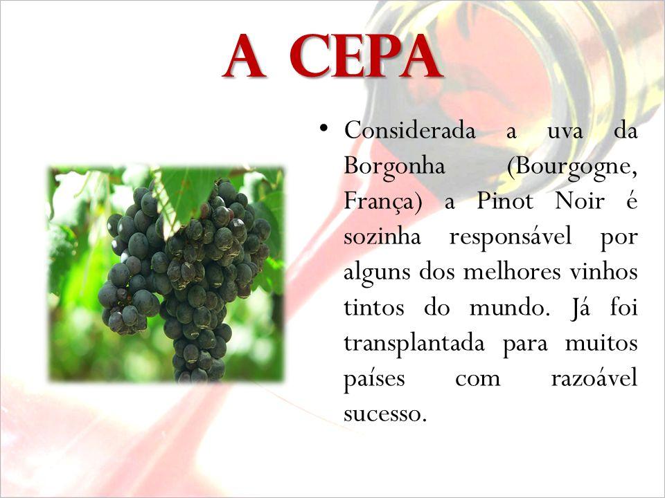 P INOT NOIR 17.11.2008 C ONFRARIA DO SAGÚ