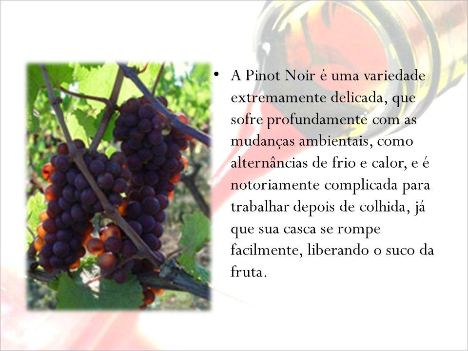 A CEPA Considerada a uva da Borgonha (Bourgogne, França) a Pinot Noir é sozinha responsável por alguns dos melhores vinhos tintos do mundo. Já foi tra