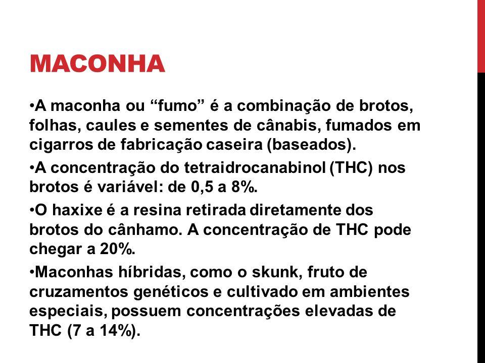MACONHA A maconha ou fumo é a combinação de brotos, folhas, caules e sementes de cânabis, fumados em cigarros de fabricação caseira (baseados). A conc