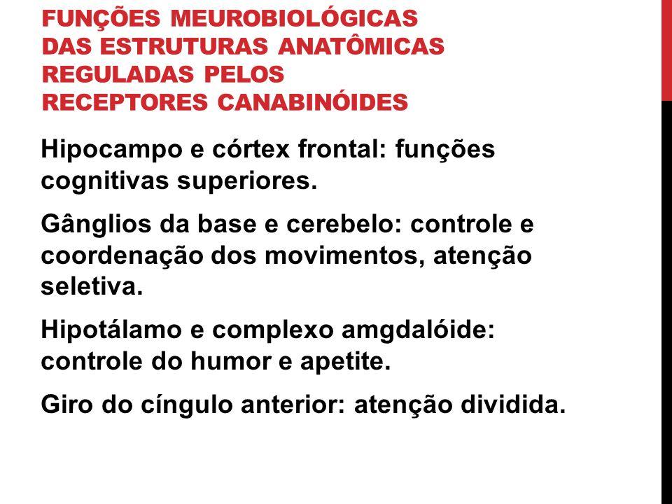 FUNÇÕES MEUROBIOLÓGICAS DAS ESTRUTURAS ANATÔMICAS REGULADAS PELOS RECEPTORES CANABINÓIDES Hipocampo e córtex frontal: funções cognitivas superiores. G