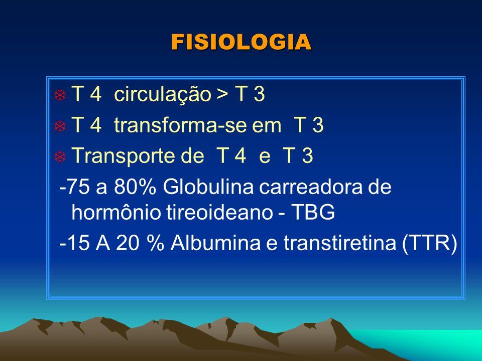 FISIOLOGIA T T 4 circulação > T 3 T T 4 transforma-se em T 3 T Transporte de T 4 e T 3 -75 a 80% Globulina carreadora de hormônio tireoideano - TBG -1