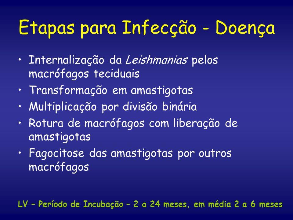 Etapas para Infecção - Doença Internalização da Leishmanias pelos macrófagos teciduais Transformação em amastigotas Multiplicação por divisão binária